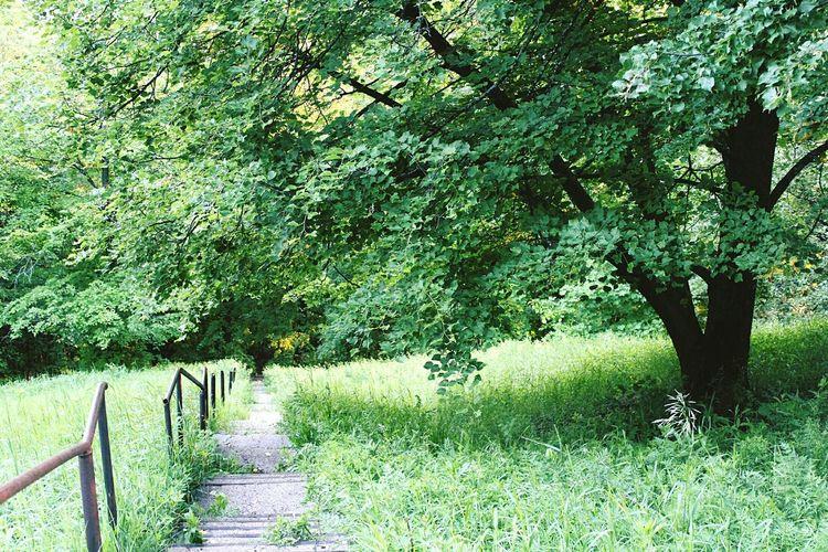 Urban Nature Tree Nature