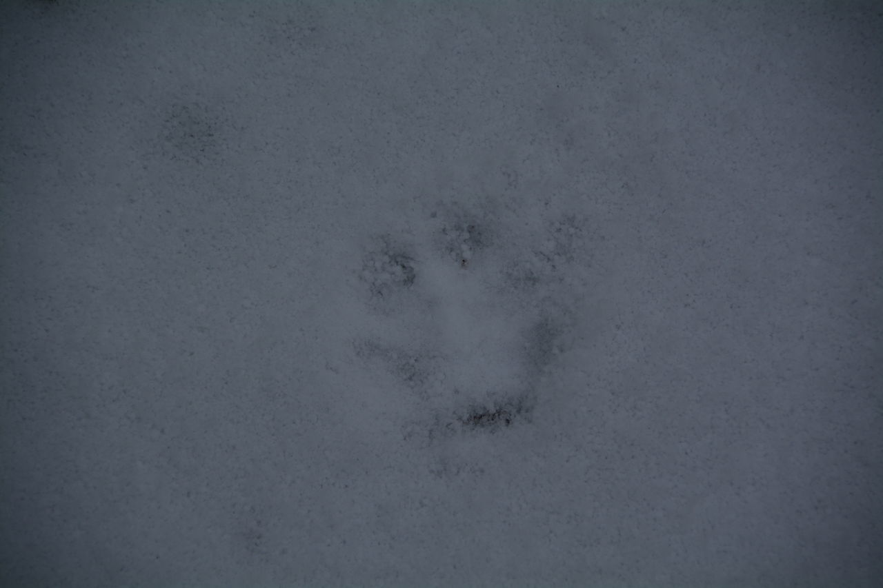 paw print, footprint, animal track, high angle view, cold temperature, snow, day, full frame, no people, winter, outdoors, nature, backgrounds, close-up