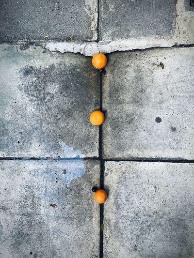 Close-up of orange fruit on wall