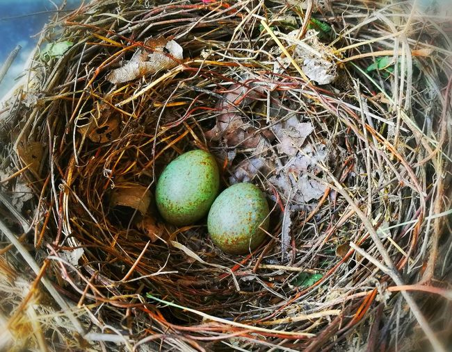 Borning nature Egg Nest Green Egg Green Bird Egg Bird Egg Nature Bird Nest Growing Nature The Great Outdoors - 2017 EyeEm Awards The Great Outdoors - 2017 EyeEm Awards