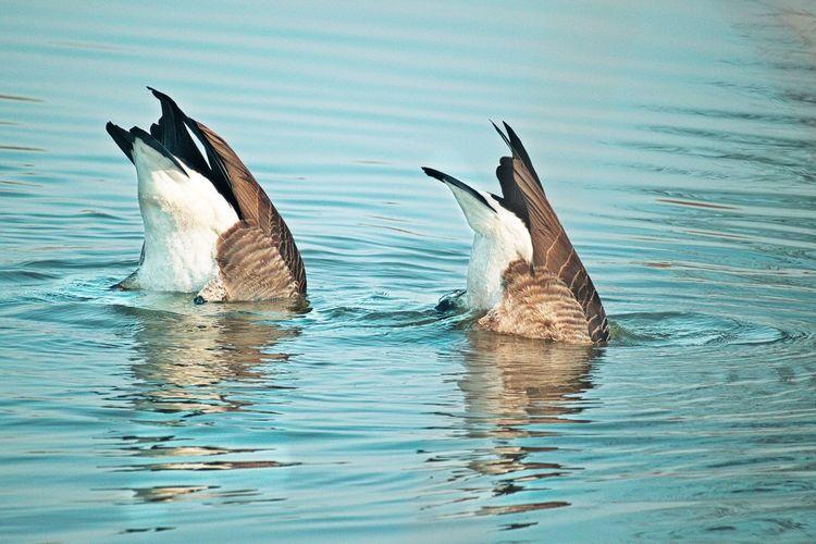 Birds swimming in water