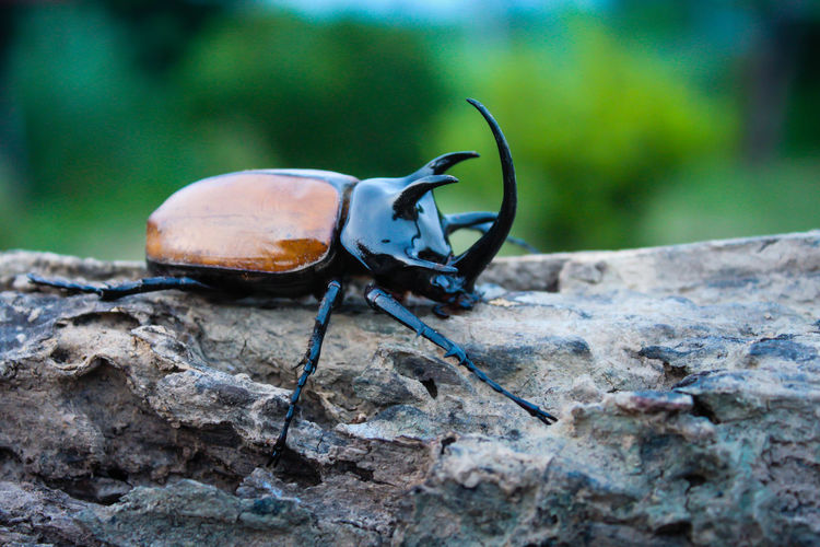 Close-Up Of Beetle On Rock