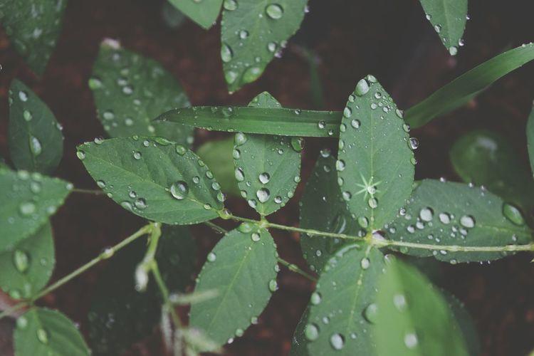 Drop Leaf Water