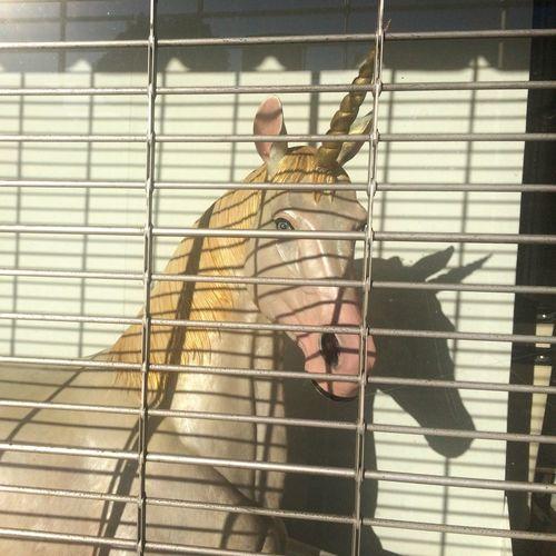 Unicorn Window