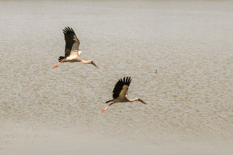 View of birds flying over water