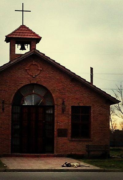 Dog Sleeping  Church