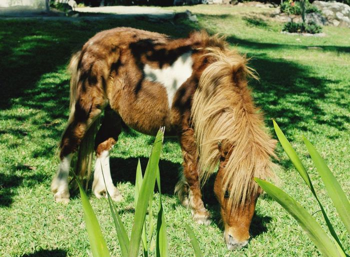 Nature Dominican Republic Jarabacoa Pony Animal Animal Photography Vacation Nature's Diversities