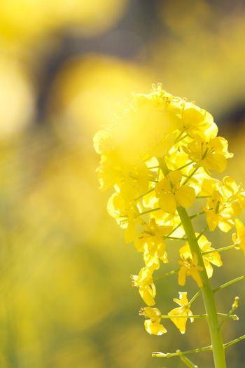 Macro_collection Macroclique Flowerporn EyeEm Best Shots - Flowers