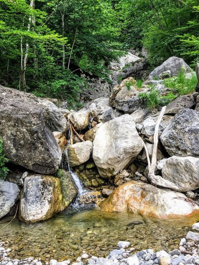 Nature Day Land Rock Solid No People Rock - Object Field Stone Growth Tree Beach High Angle View Outdoors Green Color Beauty In Nature Stone - Object Plant Tranquility Sunlight