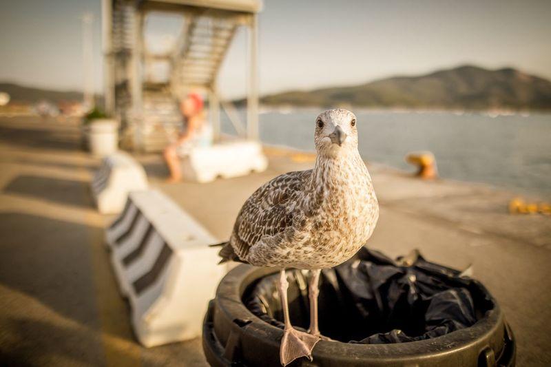 EyeEm Selects Finding Nemo Bird Animal Themes Water No People