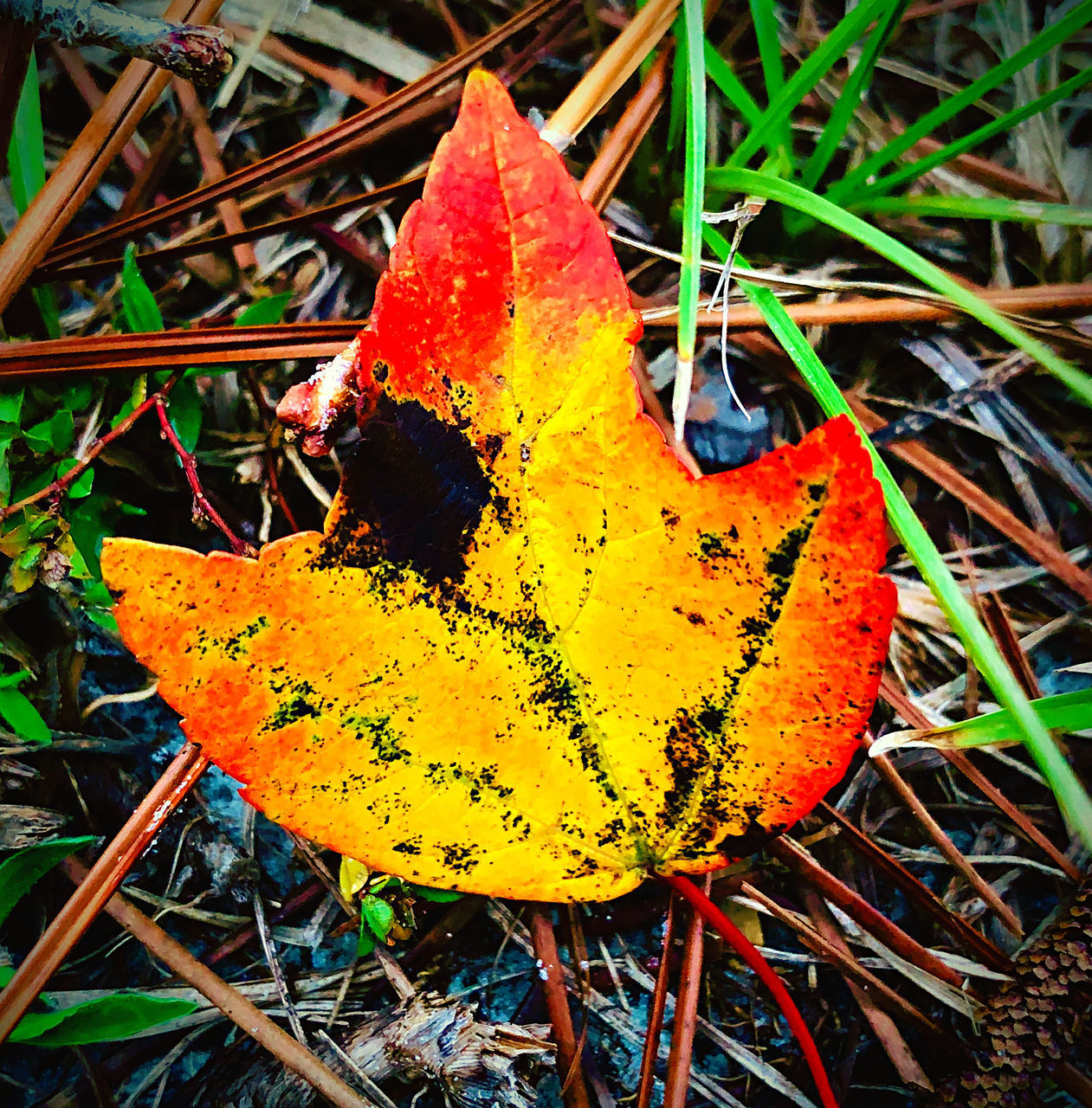 leaf, plant part, close-up, plant, autumn, yellow, nature, change, no people, day, orange color, beauty in nature, land, growth, field, vulnerability, fragility, outdoors, focus on foreground, tranquility, leaves, natural condition