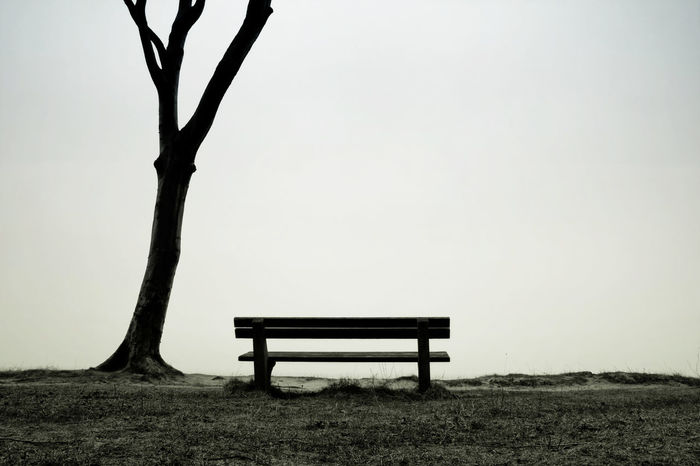 Bank and tree Baltic Sea Nature Tree View Absence Bank Beauty In Nature Bench Clear Sky Day Empty Landscape Minimalism Nature Nienhagen No People Outdoors Park - Man Made Space Relaxation Scenics Sky Tranquil Scene Tranquility Tree