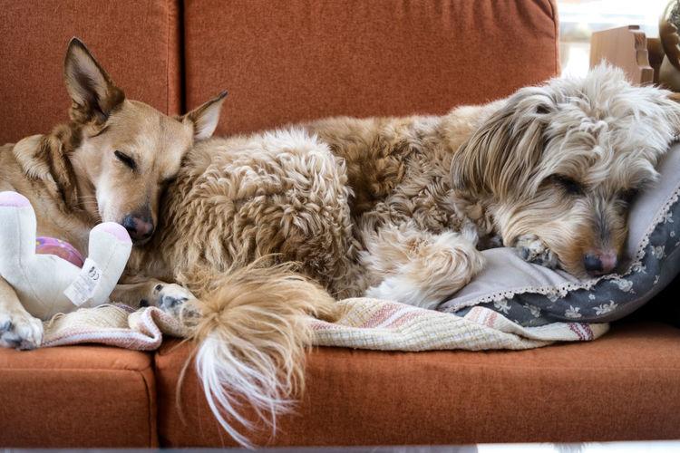 Close-up of dogs sleeping on sofa