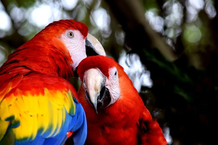 Parrot Bird Red Multi Colored Portrait Close-up Nature No People Outdoors Beauty In Nature Animal Photography Animallovers Animal Love Animal Themes Animal Head  Animal Guacamaya Guacamayas Guacamayas En Arbol Guacamayo