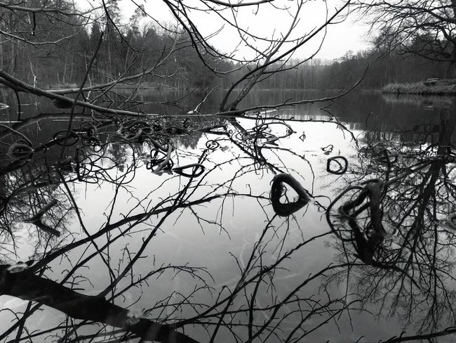 Lake Bärensee Black And White Stuttgart Germany Nature Natur B&w Perspectives On Nature Black And White Friday