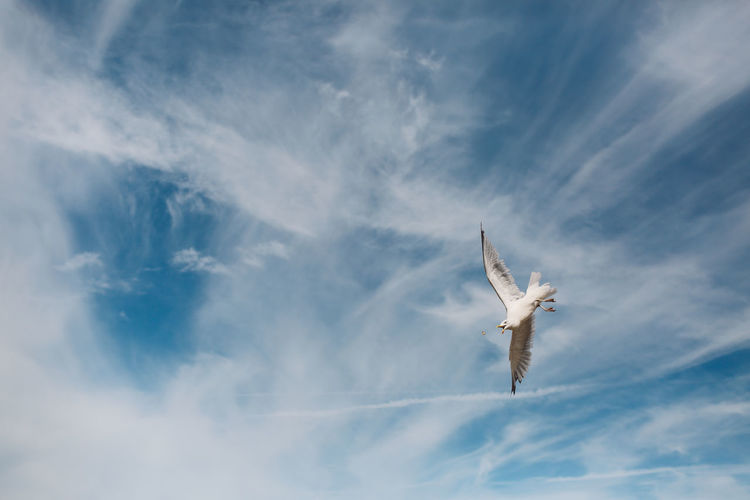 Action Beauty In Nature Blue Catching Food Cloud Cloud - Sky Cloudy Day Dramatic Sky Flight Flying Low Angle View Nature No People Outdoors Scenics Seagull Sky Tranquility
