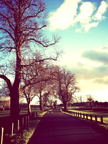 A Winter Walk Tree Bare Tree Sky Outdoors Road The Way Forward Shades Of Winter Nature Cloud - Sky Beauty In Nature Day
