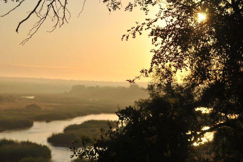Crocodile river Krugernationalpark Nature Sunset