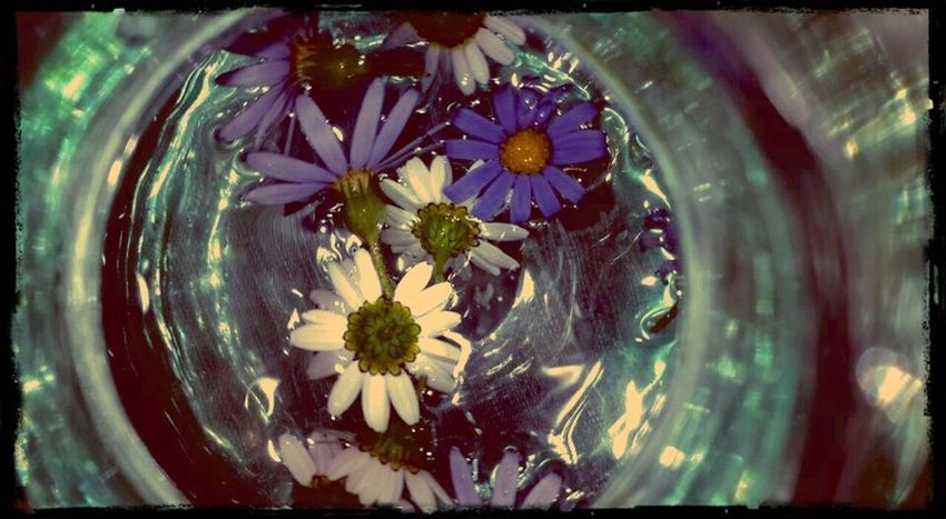 Adrift Purple And White Daisies Bouquet In A Bottle