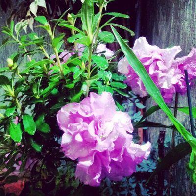 Flores Flower Instagallerys Instagalleries instagram igerscampinas