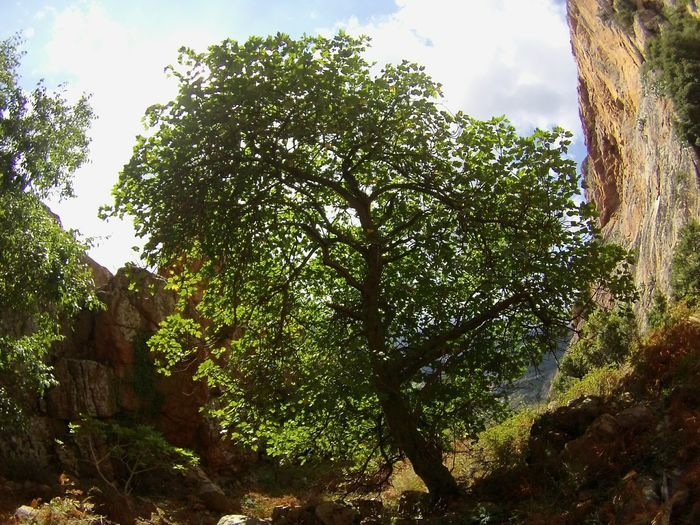 2015  Monte Gozzi Gopro Tree Nature Monte Gozzi Mountain Wonderful Day Feel Good Enjoy Peacelovejoy DontWorryBeHappy Climb EyeEmNewHere EyeEm Naturephotography
