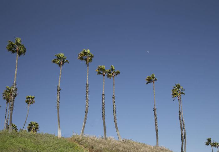 California Long Beach California Daytime Moon Palm Trees