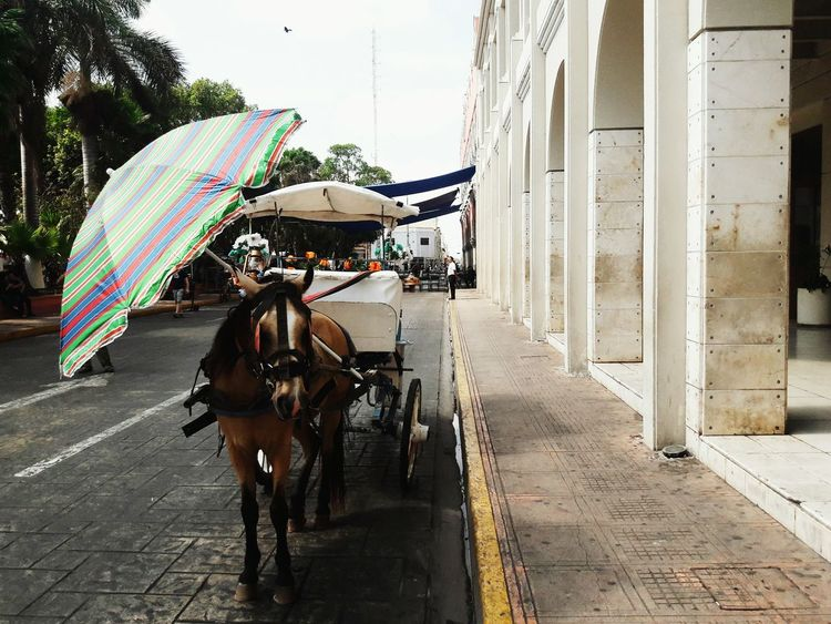 Horse with umbrella Horse Horse Carriage Umbrella Animal Exploration Animal Rainbow Umbrella Colorful Umbrella Street Street Photography Mexico Colonial Architecture Colonial Style Colonial Cities Downtown Transportation Transport Old Transport Traditional