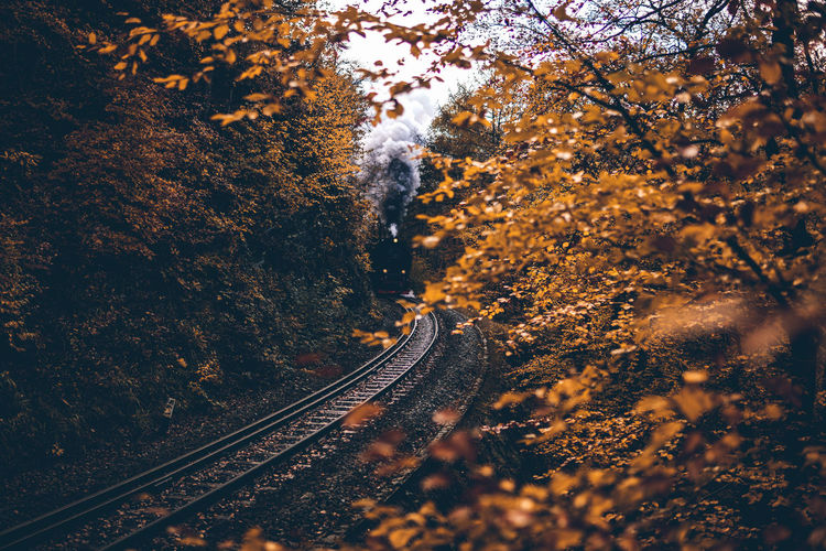 High angle view of railroad tracks amidst trees during autumn