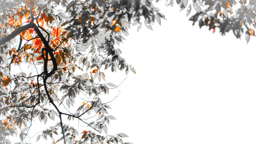 Life is simple Autumn Autumn Colors Beauty In Nature Clear Sky Colour Colourful Day Elégance Flower High Section Ink Leaf Let Go Love Miracles Nature Painting Quired. Simple Photography Simplicity Sky Sunlight Tree Wallpaper Zen