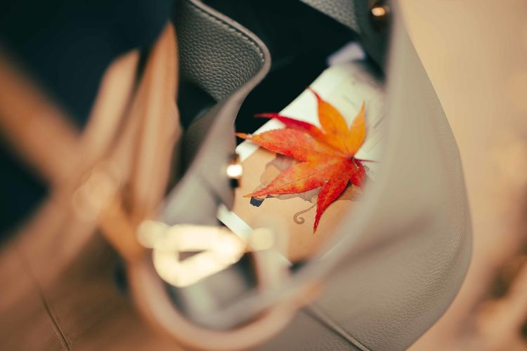 Close-up of maple leaf in a bag