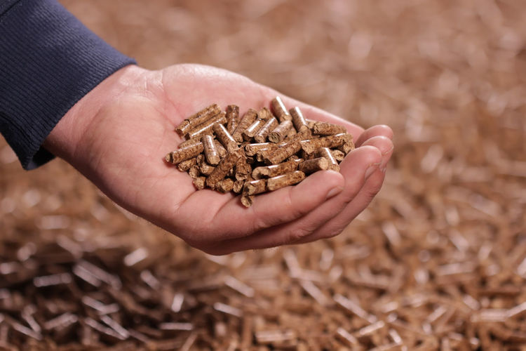 Man holding wooden pellet Pellets Pellet Wood Wood - Material Wooden Granules Granulated Granule Factory Man Human Hand Hand Close-up Holding Pressed  Sawdust Industry Industrial Heating Fuel Energy Renewable Energy Renewable Production Biomass