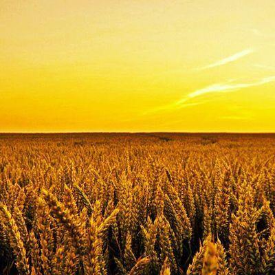 如果我能够拥有一座大果园,我愿意放下一切追求去种田。每一个早晨我耕耘在绿色田间,每一个黄昏我守望在家乡麦田。