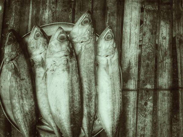 Mackerel Mackerel Fish Fish