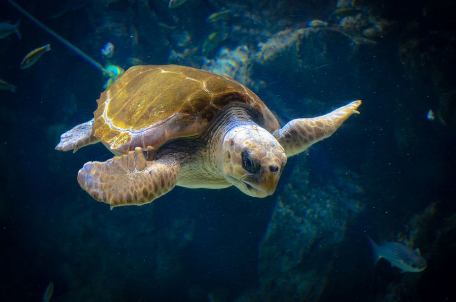 Beautiful Nature Meerestier Pet Pets Schildkröte Selten Swimming Turtle