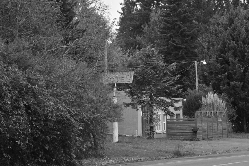 Architecture Beauty In Nature Built Structure Day Growth Monochromatic Motel Sign Nature No People Outdoors Tree
