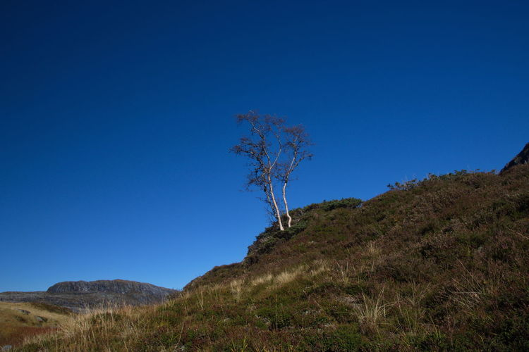 Lonely tree in