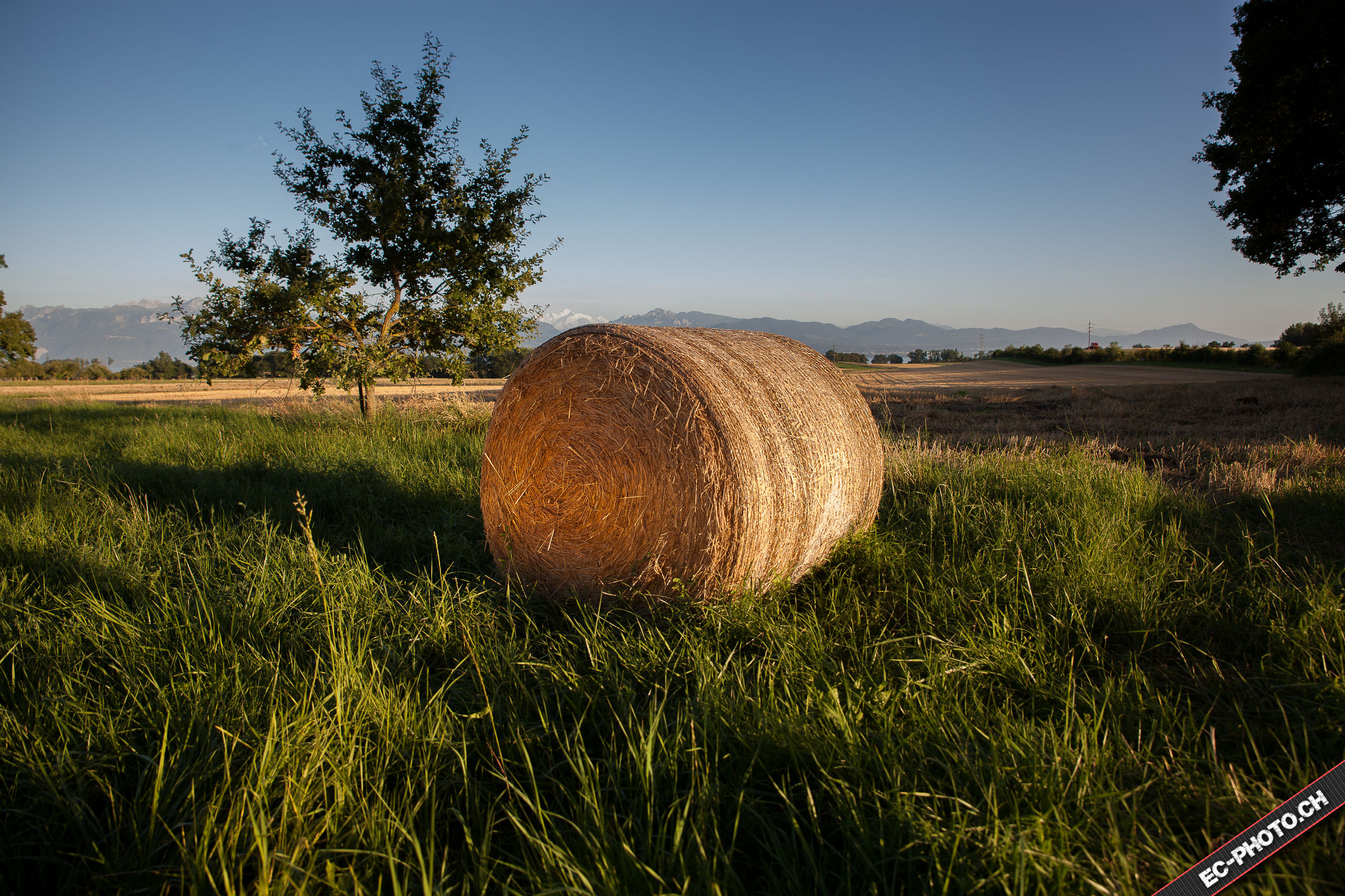 tree, landscape, tranquil scene, clear sky, tranquility, grass, rural scene, field, scenics, nature, growth, farm, agriculture, horizon over land, beauty in nature, harvesting, sky, green color, day, blue, crop, summer, non-urban scene, outdoors, no people, mountain, single tree, cultivated land, remote, grassy, solitude