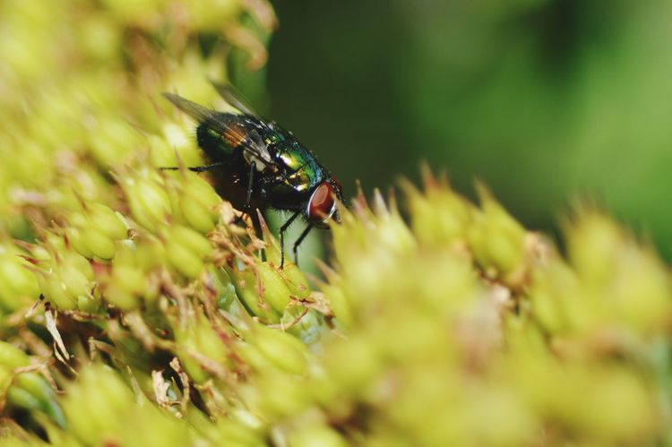 Insect Selective Focus Flower Beauty In Nature Green Color Day Outdoors Bug Close-up Macro Photography Macro Beauty