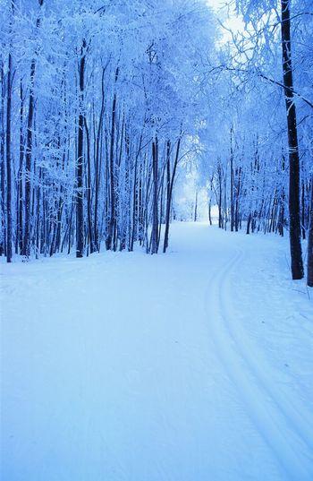 Ski Trail Bare
