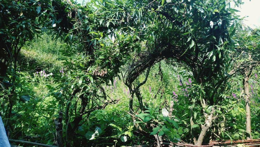 Tree My Best