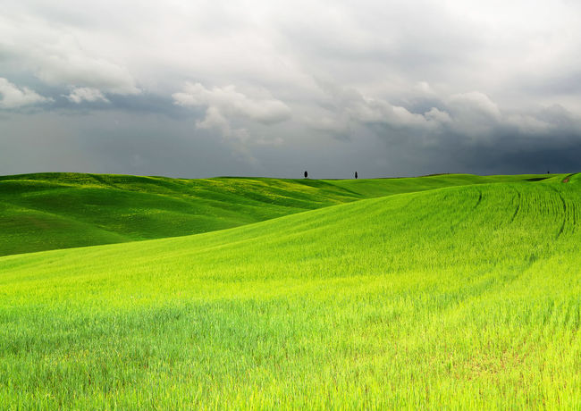 Agriculture Hills Tuskany Agriculture Beauty In Nature Cloud - Sky Cloudy Stormy Cypress Trees  Day Environment Field Grass Green Color Growth Idyllic Land Landscape Nature No People Outdoors Plant Rolling Landscape Rural Scene Scenics - Nature Sky Tranquil Scene Tranquility
