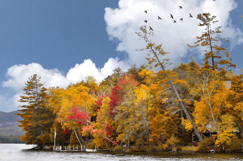 Autumn trees by lake in forest against sky