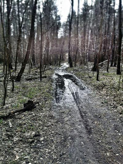 My first time spring biking after winter 2012/2013MTB In The Forest Trail Ride Nature
