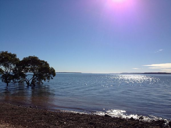 Blue Wave Water Sky Sun Glistening Mangrove
