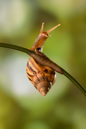 Snail hanging in the branch