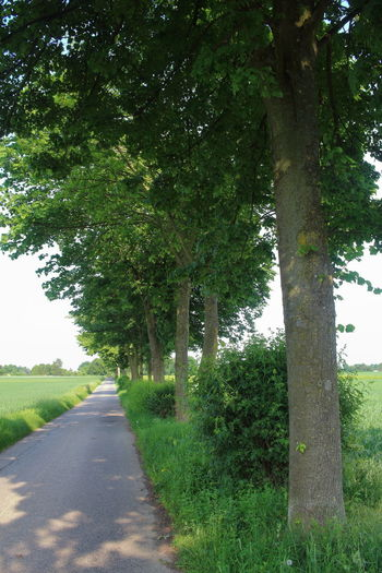 Day Grass Growth Nature No People Outdoors Road Summertime Summertime Views The Way Forward Tree