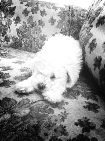 Mona I Love My Dog