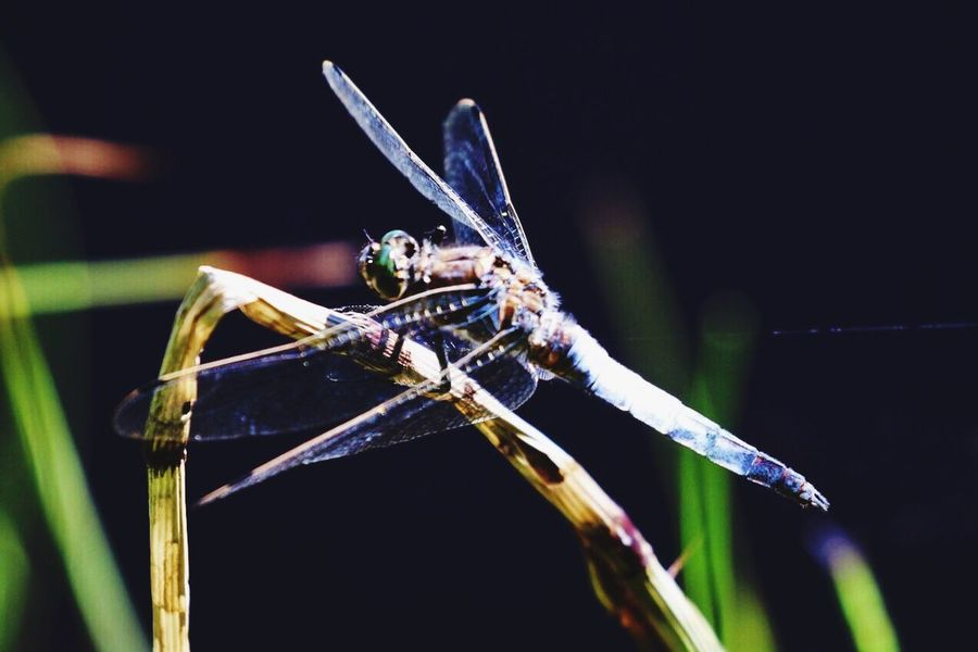 EyeEm Selects Insect Animals In The Wild Tranquility Outdoors Tranquil Scene