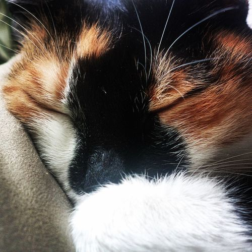 Cat I Love My Cat ❤ Catoftheday Sleeping Beatiful