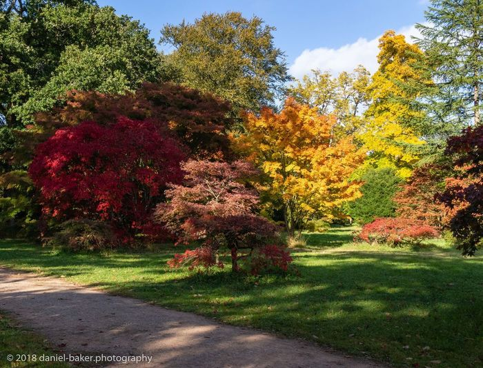 Tree Plant Beauty In Nature Autumn Nature Tranquility No People Shadow Outdoors Colorful HDR